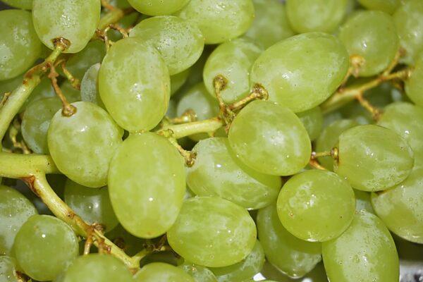 Виноград Султана (Султанина)