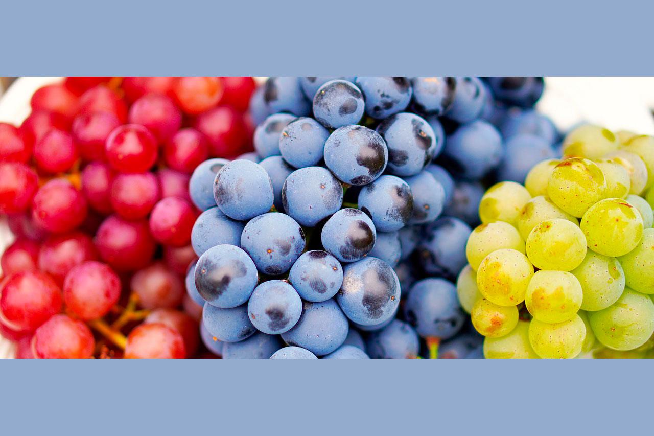 Виноград столовый или винный