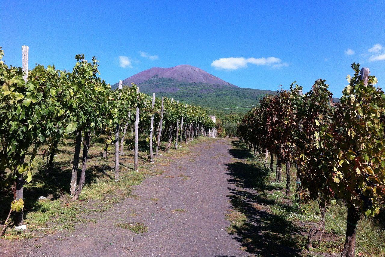 Виноградники Помпеи