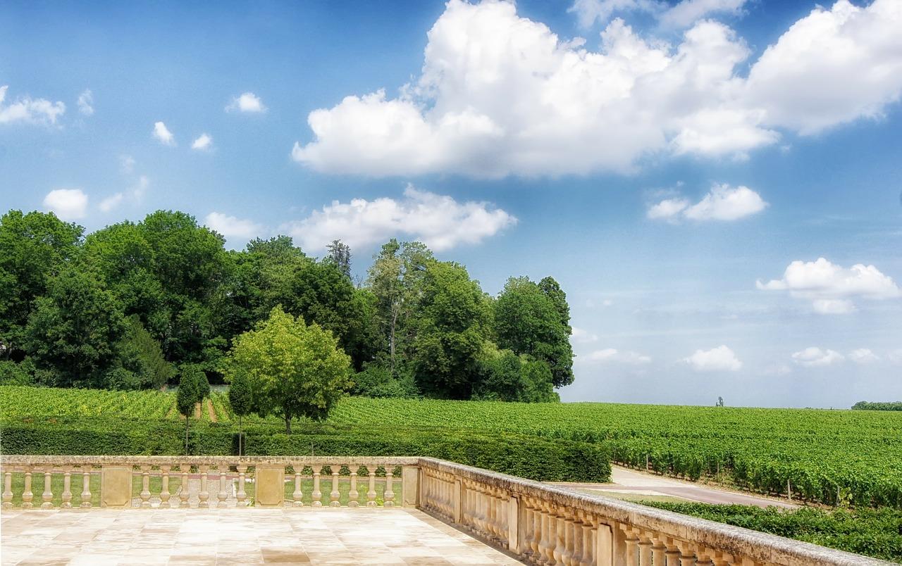 Виноград в Бургундии
