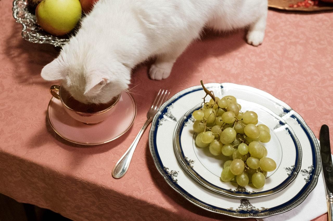 Кошки и виноград