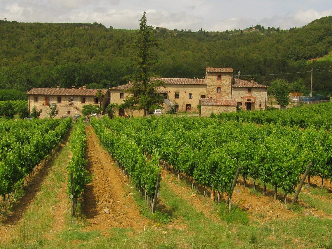 Виноград в Кьянти (Тоскана,Италия)