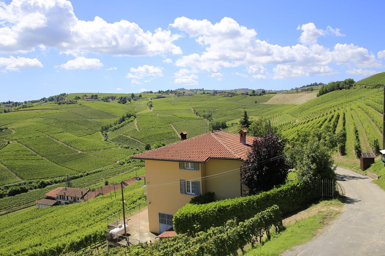 Виноград в Пьемонте (Италия)