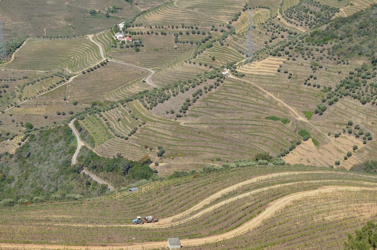 Виноград в Португалии
