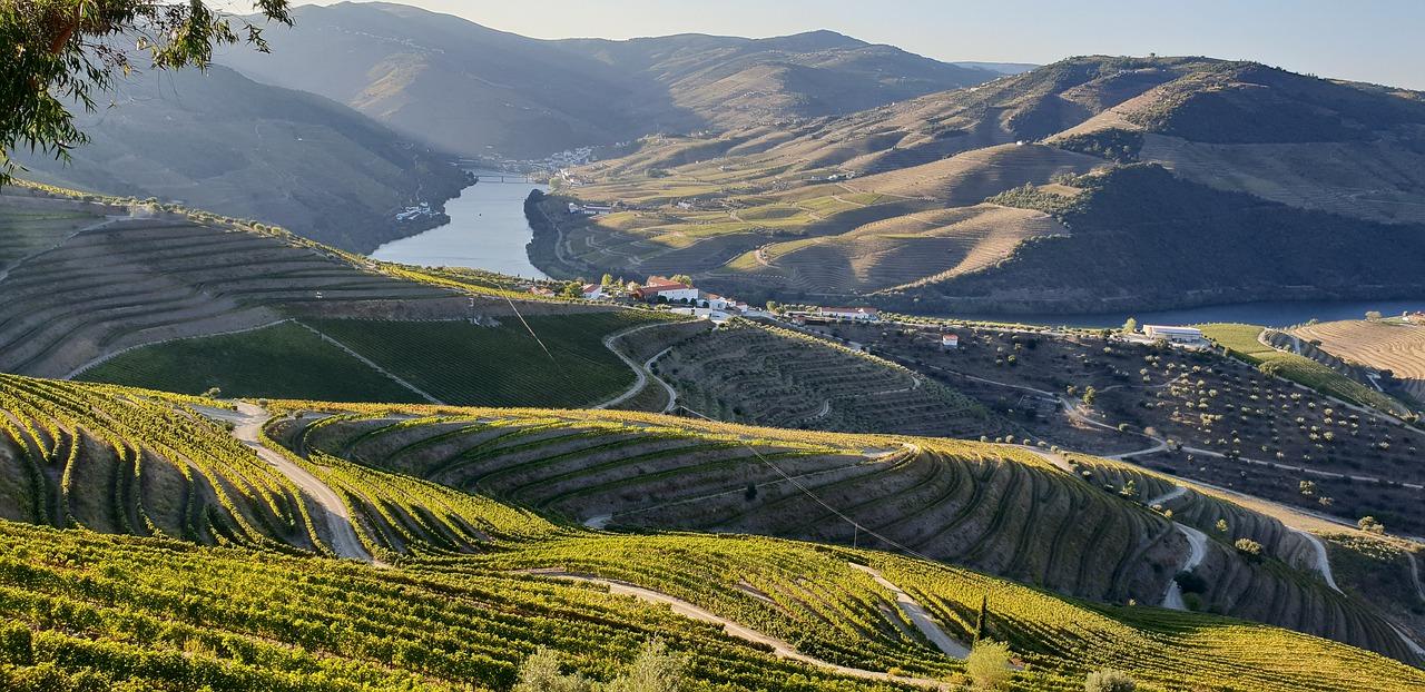 Виноградники долины Дору