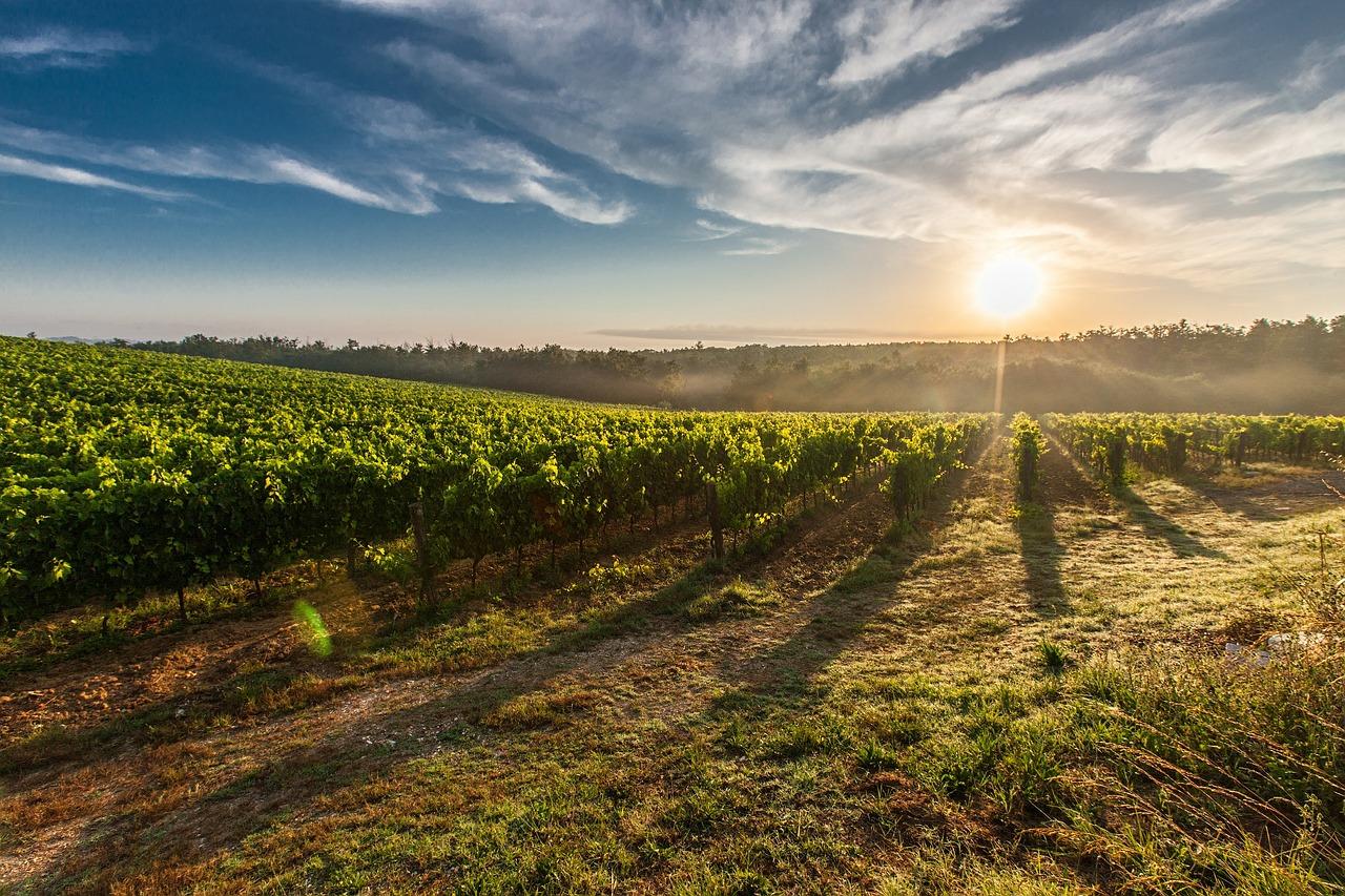 5 самых красивых виноградников в мире