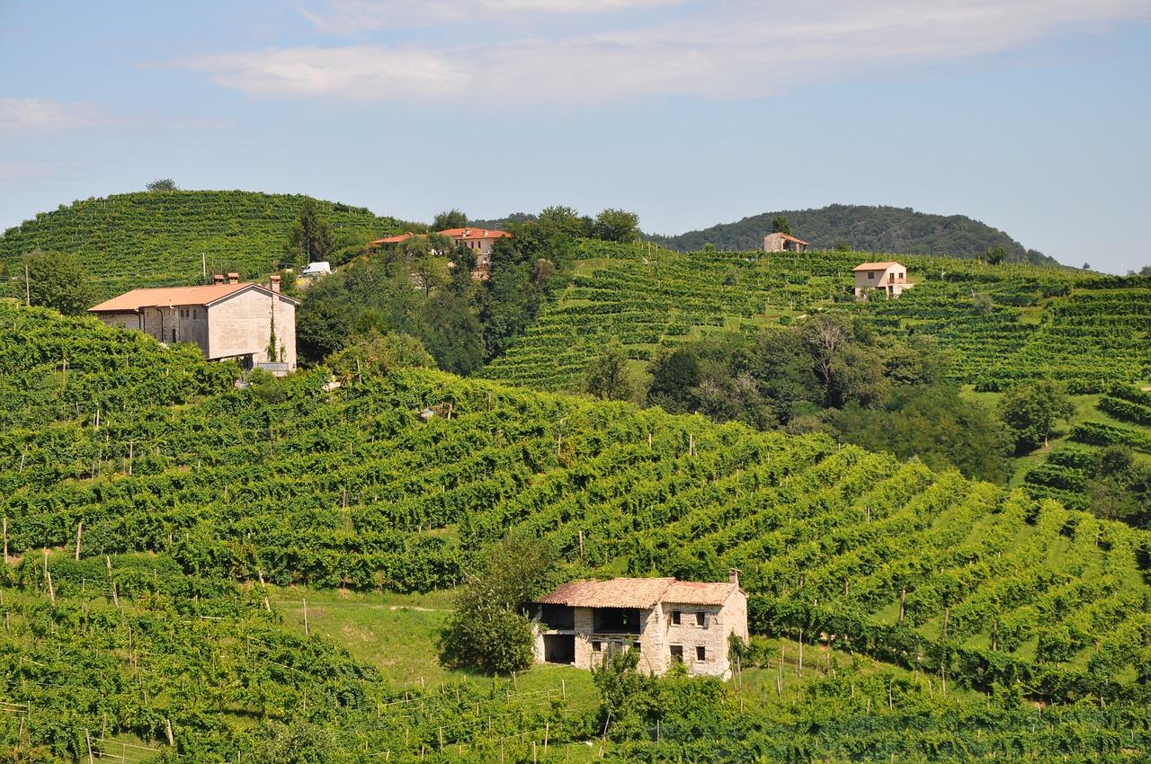 Виноград в Италии