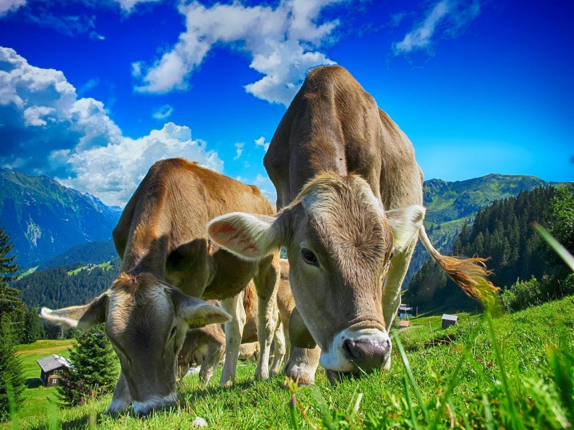 Органическое животноводство