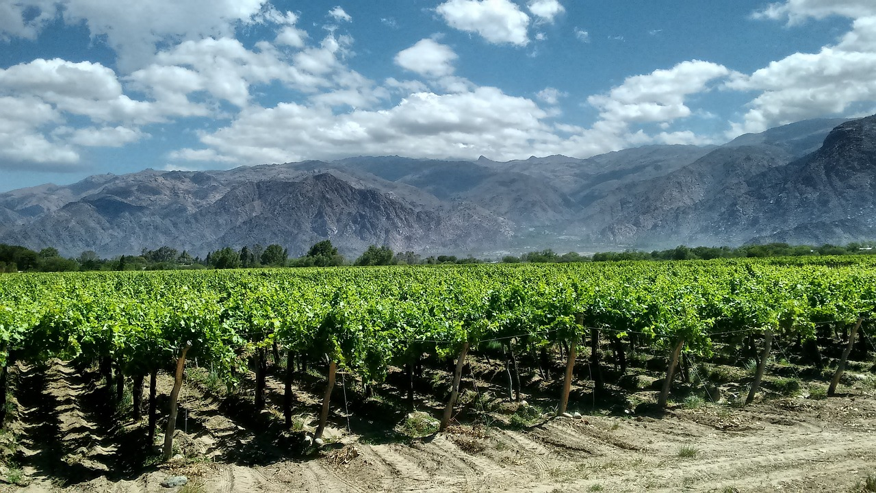 Виноградники Аргентины