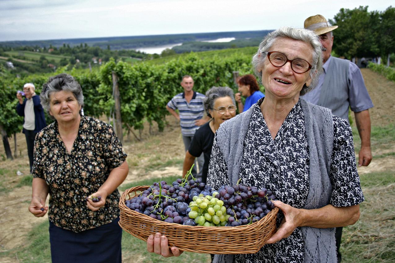 Натуральное виноделие