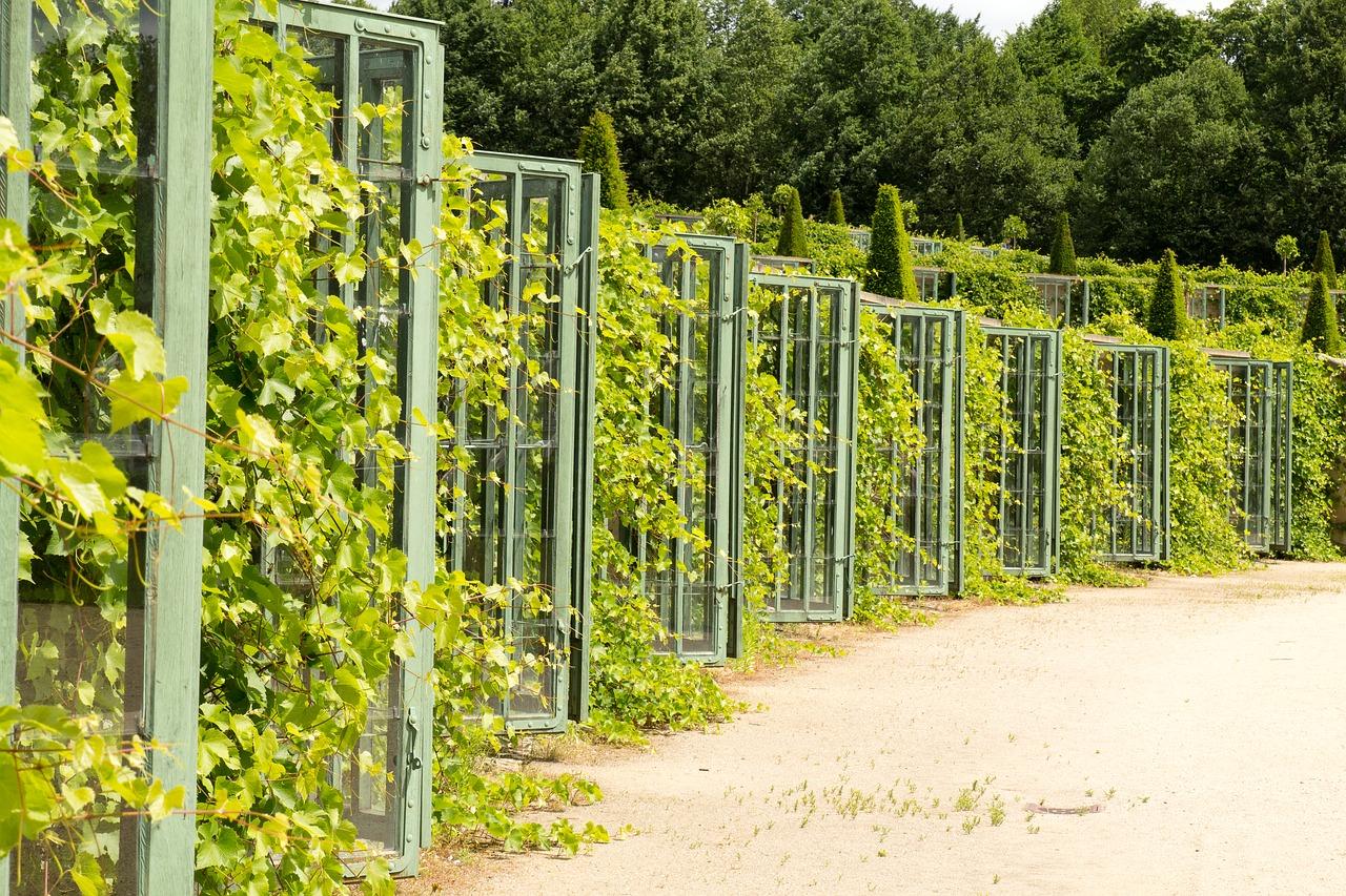Виноградники дворца Сан-Суси