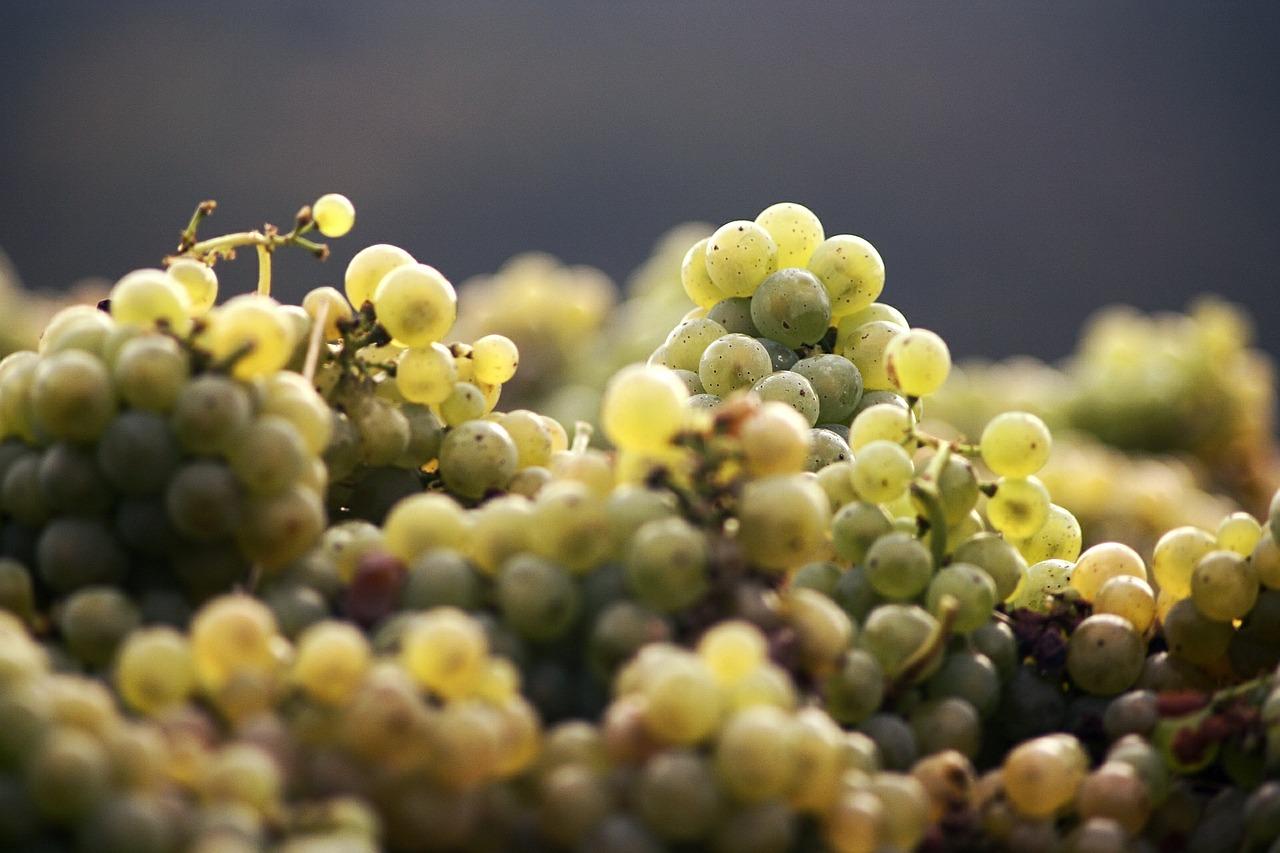 Белый виноград для домашнего вина